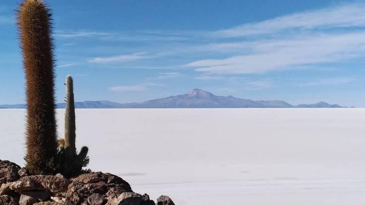 Cactos Salar de Uyuni